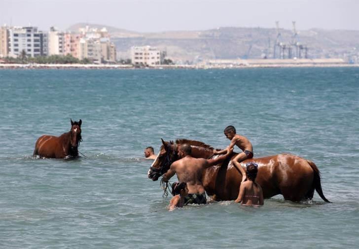 άλογα στη θάλασσα