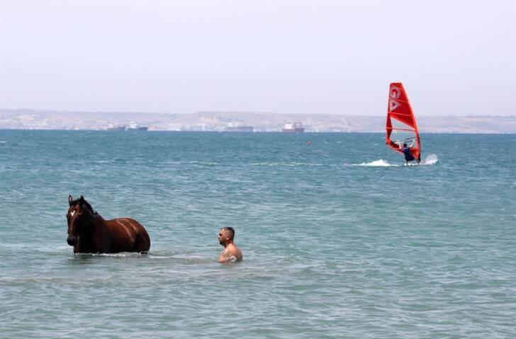 άλογα τρελαίνονται στη θάλασσα