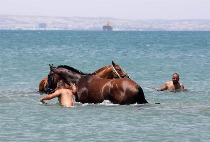 τα άλογα τρελαίνονται στη θάλασσα